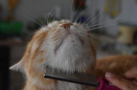 Alledaagse verzorging van katten