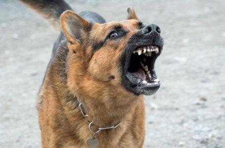 Elektronische halsbanden voor honden
