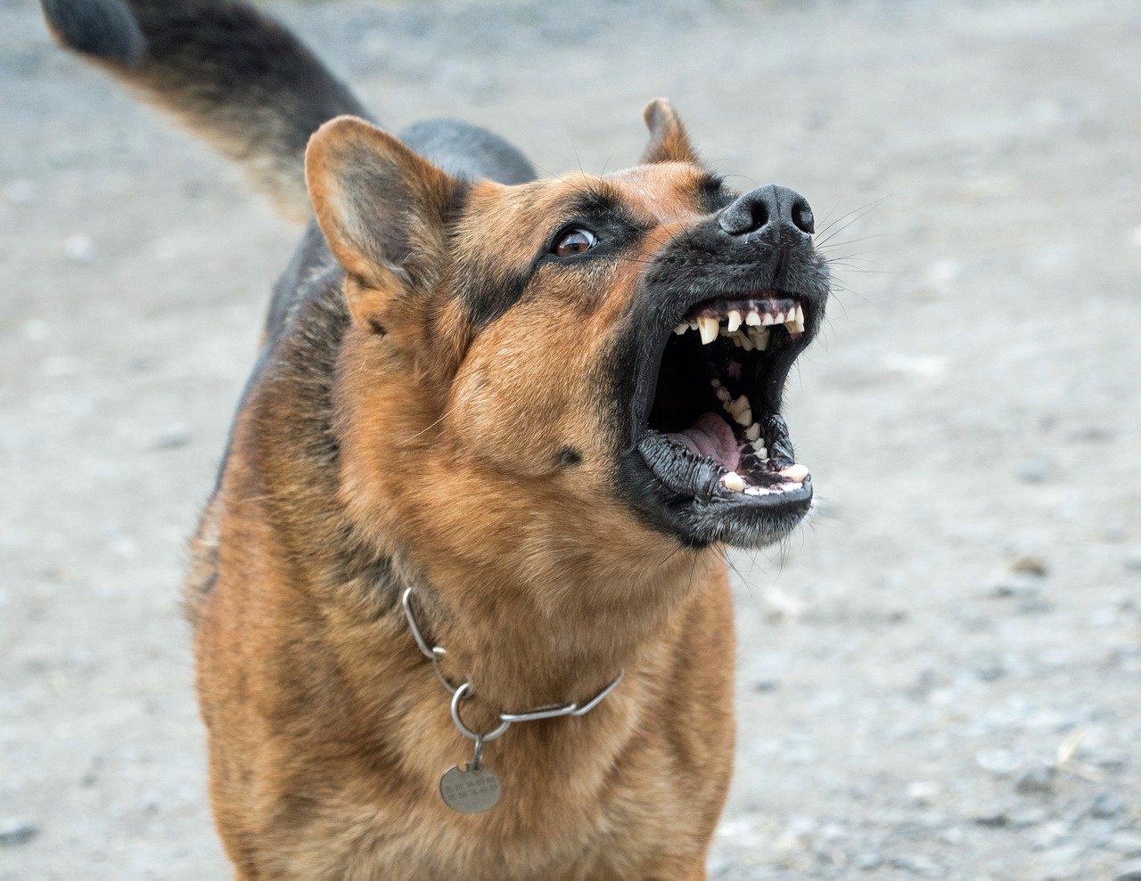 Blaffen hond elektrische halsband