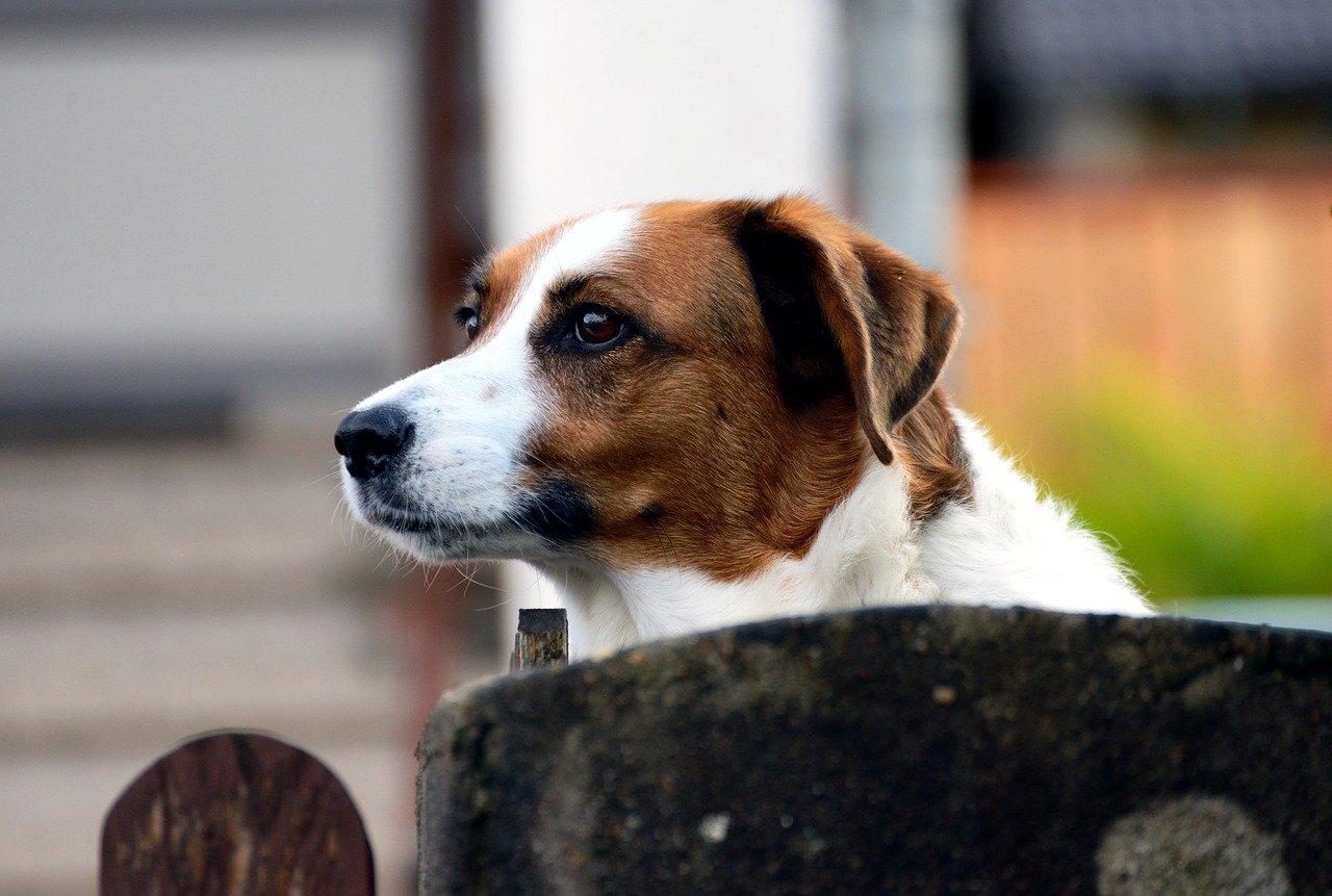 Hond waaks
