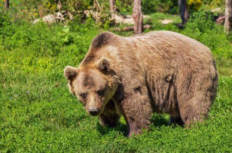 Het leven van een beer