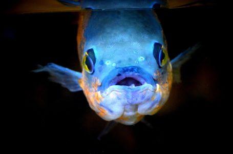 De meest bijzondere vissoorten verzameld