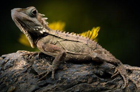 Bijzondere beesten: Netpythons en andere reptielen