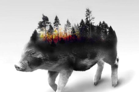 Milieu sparen met minder vlees eten