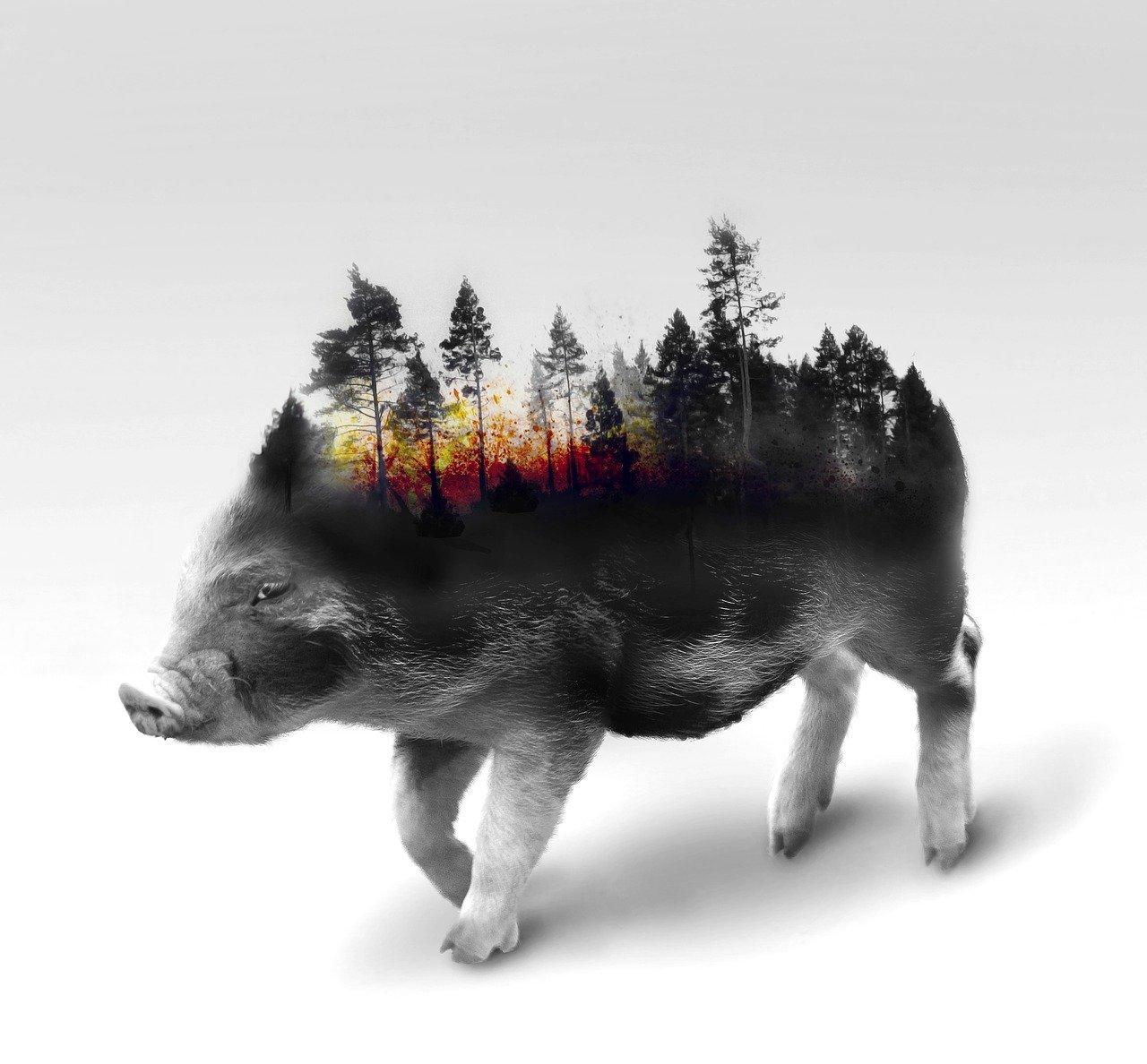 Minder vlees milieu