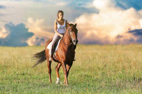 Paarden en horzels