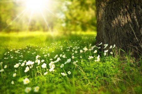 De lente begint op 1 maart?